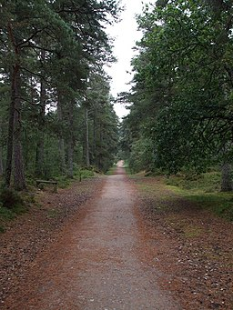Old Military Road - geograph.org.uk - 984413