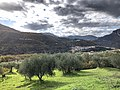Olive di Vietri di Potenza.jpg