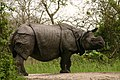 One horned rhino (1).jpg