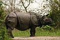 One horned rhino (1).jpg