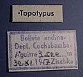 Oogeneius martinezi label.jpg