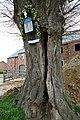 Opgaande linde met boomkapel - 375393 - onroerenderfgoed.jpg