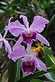 Orchid (32512076074).jpg