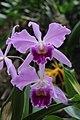 Orchid (33213126011).jpg