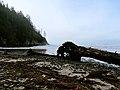 Oregon Coast (8237545765).jpg