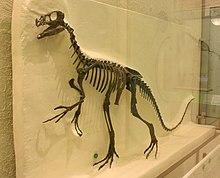 ornitholestes wikipedia