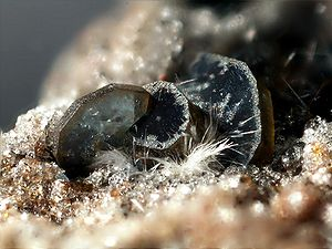 Mullite - White, filamentous mullite in front of thicker osumilite platelets (Photo width 1.5 mm) Found in Wannenköpfe, Ochtendung, Eifel, Germany