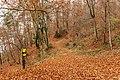 Pörtschach Leonstein Gloriettenweg Buchenwald 28112019 7597.jpg