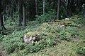 Pöykärin muinaislinna 7, sortunut muuri.jpg