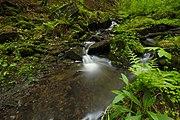 Přírodní rezervace Kavinský potok (13).jpg