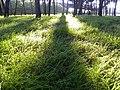 PINAR DE BARAJAS 2 - panoramio.jpg