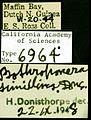 Pachycondyla simillima castype06964-03 label 1.jpg