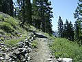 Pacific Crest Trail, south of Etna Summit Trailhead - panoramio.jpg