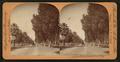 Palm Drive, San Bernardio, Cal., U.S.A, from Robert N. Dennis collection of stereoscopic views.png