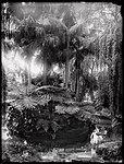 Palm Grove, Botanic Gardens (4903250647).jpg