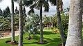 Palmetum5.jpg