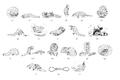 Pangolin behaviour (Manis crassicaudata).png