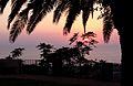 Paola (CS) - Calabria - mare al tramonto - palma che fa da cornice- vista dalla villa comunale.jpg