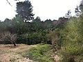 Paraje de la Font de la Nèix Lorcha Alicante.jpg