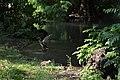 Parco Sempione - dettaglio laghetti.jpg