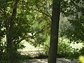 Parco della villa di quarto 02.JPG