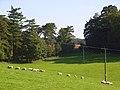 Parkland, Chilton Foliat - geograph.org.uk - 987858.jpg