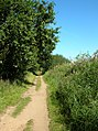 Path along Holkham Gap - geograph.org.uk - 544079.jpg