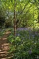 Path in Captains Wood - geograph.org.uk - 422996.jpg