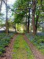 Path through the bluebells - geograph.org.uk - 418750.jpg