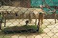 Patiala Zoo, Patiala (07).jpg