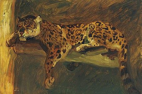 Paul Klimsch Schlafender Jaguar