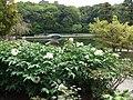 Peony garden @Tokugawaen - panoramio.jpg