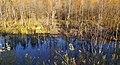 Petit marais du lac Brompton - panoramio.jpg
