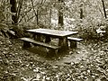 Picnic table in the Lake Marie day use aera in Umpqua Lighthouse State Park.jpg