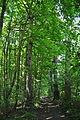 Pidhorodne-modryna-n1-15058014.jpg