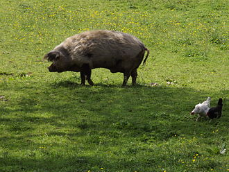 Brimpsfield - Livestock on Brimpsfield village green