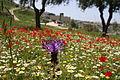 PikiWiki Israel 38194 Blossom at Emek Tzurim National Park.jpg