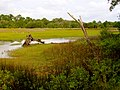 Pinckney Island National Wildlife Refuge (5957940981).jpg