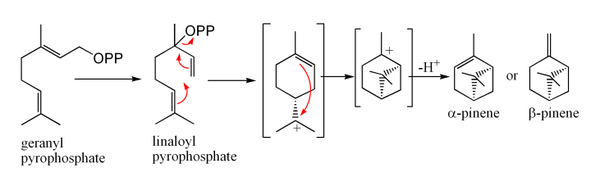 Biosynthesis of pinene from geranyl pyrophosphate