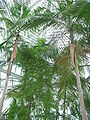 PlantasEstufaJardimBotânicoCuritiba.JPG