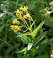 Plants OB 301 (38165736284).jpg