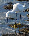 Playa Confital EM1B0377 (32310474395).jpg