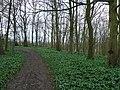 Pocklington Wood - geograph.org.uk - 747284.jpg