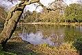 Pond, Lakeside, Enfield - geograph.org.uk - 735353.jpg