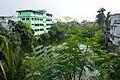 Pond - Andul 1st Bye Lane - Padmapukur Water Treatment Plant Area - Howrah 2015-10-20 6076.JPG