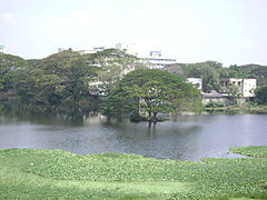 Pond at Chetput.JPG