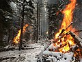 Prescribed burns - Bighorn National Forest - November 2017.jpg