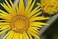 Pretoria Botanical Gardens-046.jpg