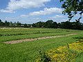 Production beds of the UK Native Seed Hub, RBG Kew.JPG