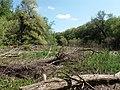 Psilskyi Landscape Reserve (05.05.19) 04.jpg